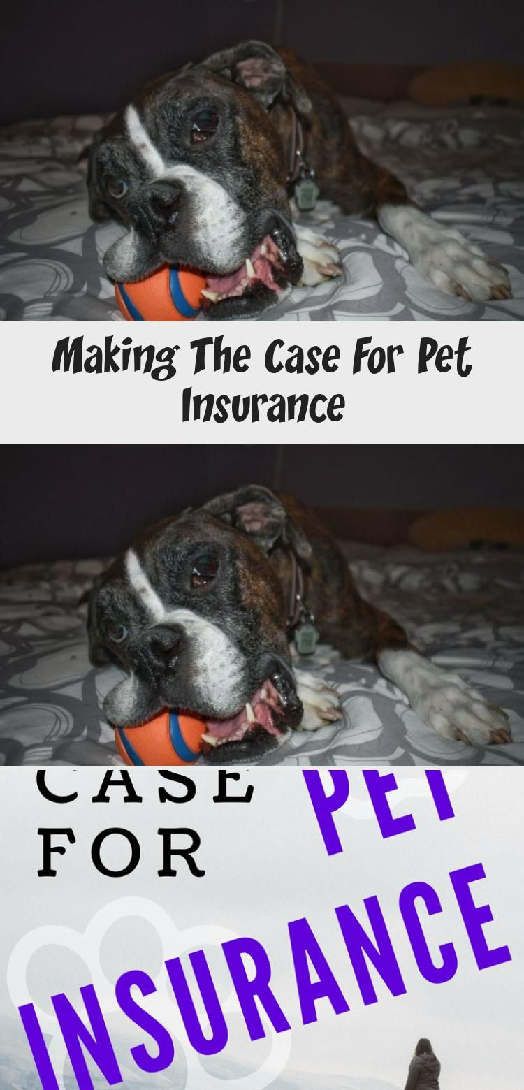 Making The Case For Pet In 2020 Pet Insurance Pets Sick Pets