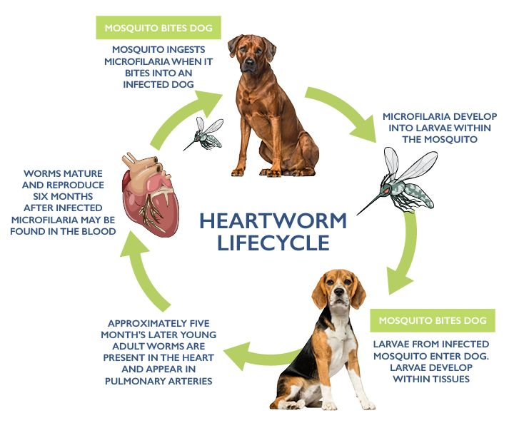 Why I Don T Give My Dog Heartworm Meds And Why You Shouldn T Either Heartworm Dogs Naturally Magazine Meds For Dogs