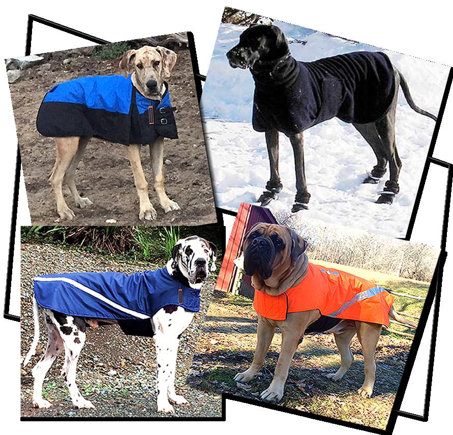 Dog Coats For Mastiff Goldenacresdogs Com