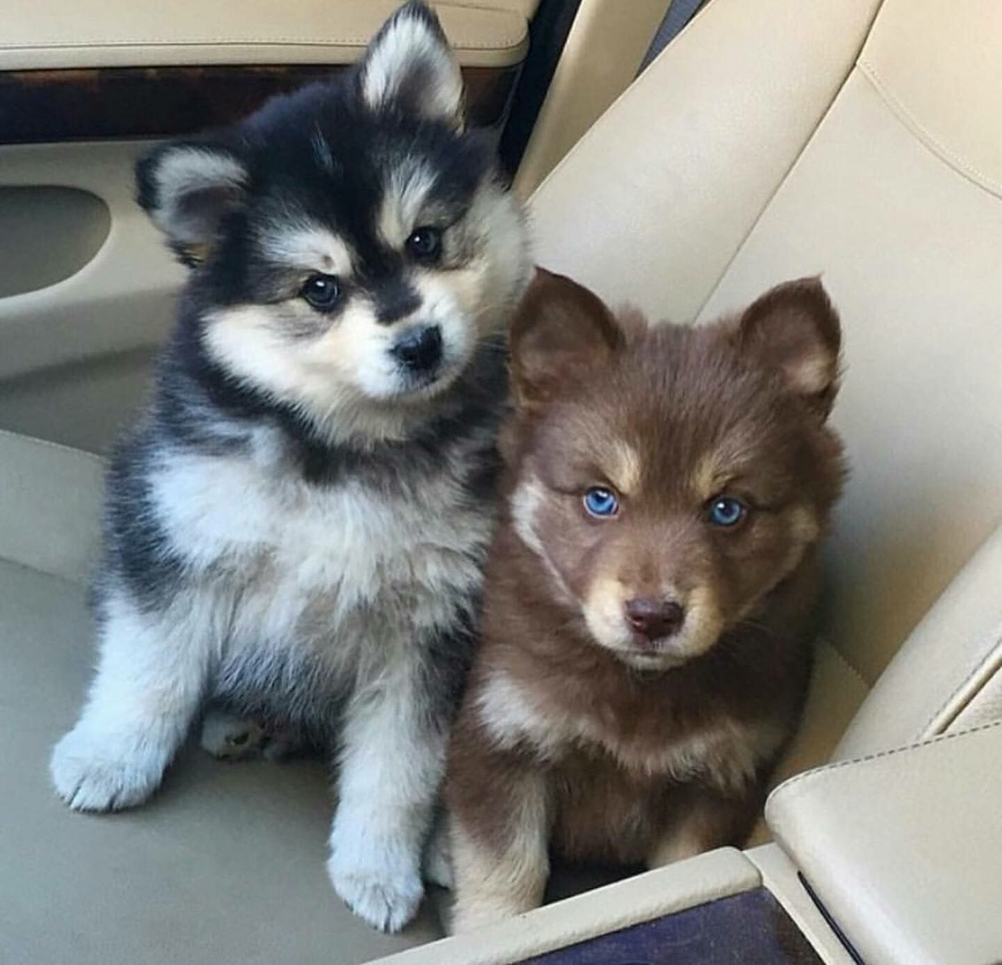 Pin by sonia5671 on Puppies Cute animals, Cute baby
