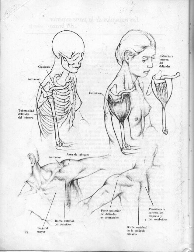 Anatomia-artistica-dibujo-anatomico-de-la-figura-humana | anato ...