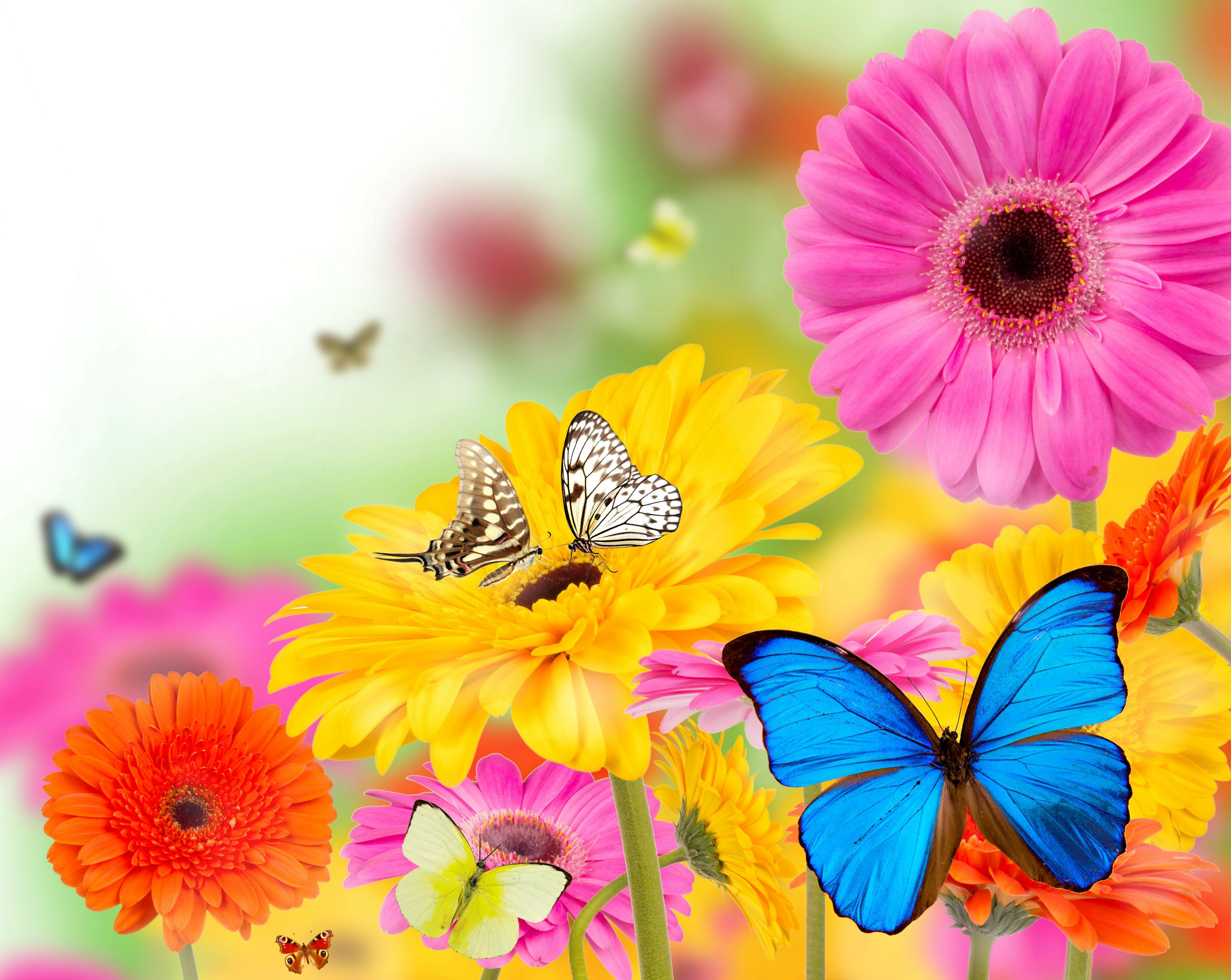 spring butterfly spring flowers and butterflies wallpapers the