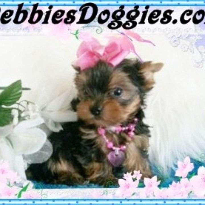 Best Soft Food For Yorkie Puppy 2021