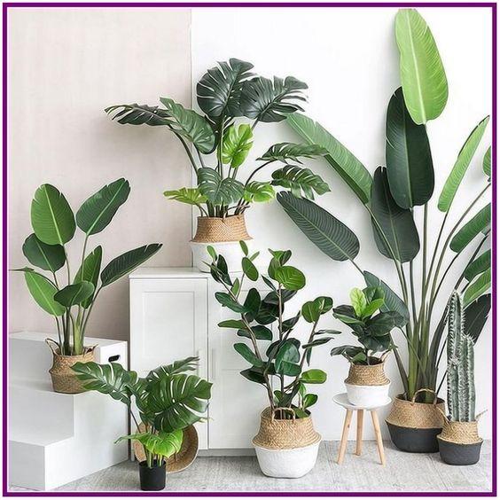 30 Indoor Decorative Plants To Bring Freshness Garden