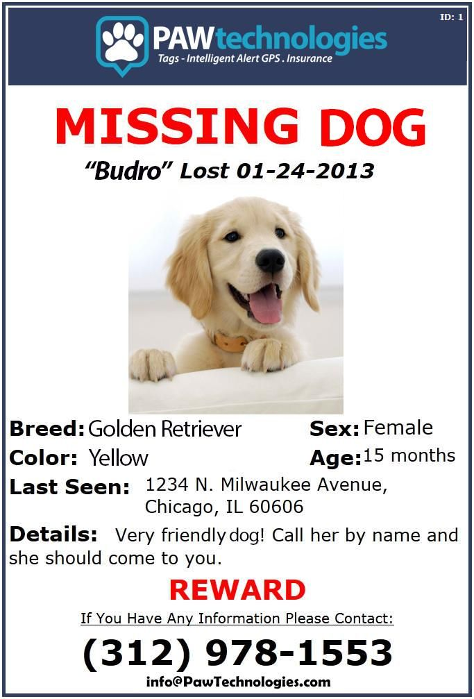 PAWtechnologies Missing Dog Flyer sample Barking from the Bayou - Lost Dog Flyer Examples