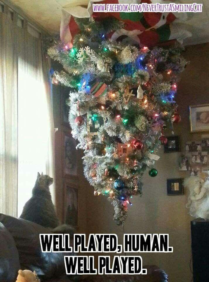 Cats Vs Christmas Trees.Cat Vs Christmas Tree Winter Christmas New Years Humor