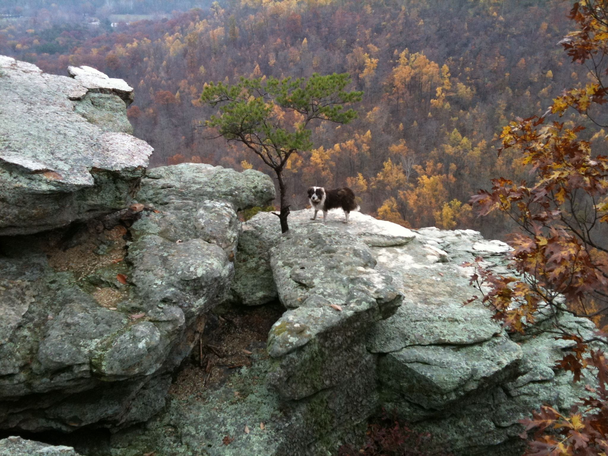 Berea Forest Trail Kentucky Trails
