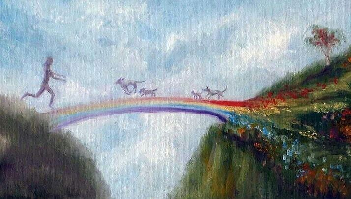 Meet You Over The Rainbow Bridge Rainbow Bridge Dog Memorial