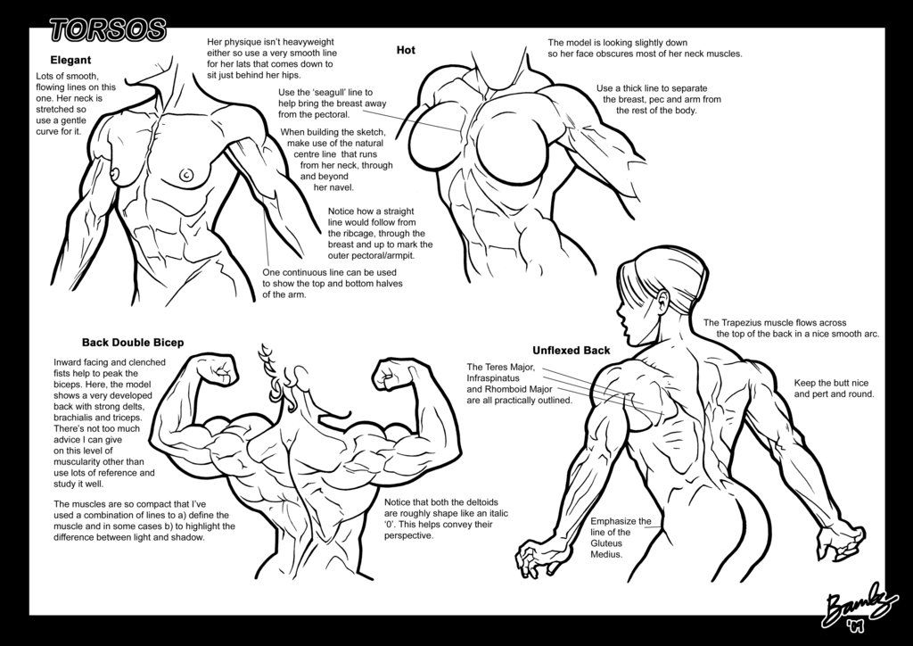 Tutorial: Torsos 1 by Bambs79 Muscular female anatomy comic or ...