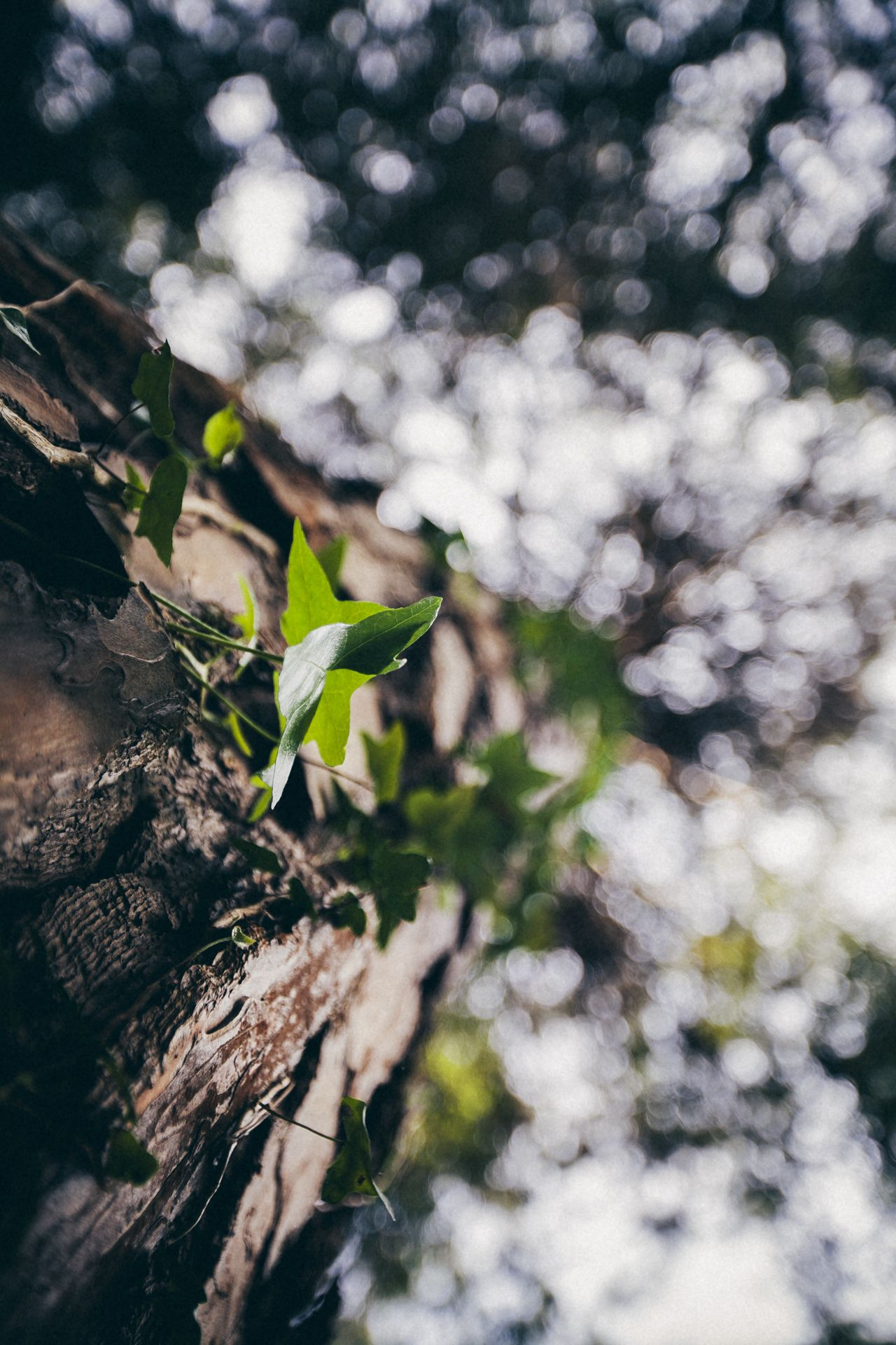 Up Nature Tree Aesthetic Photography Nature Nature Photography Macro Photography Nature