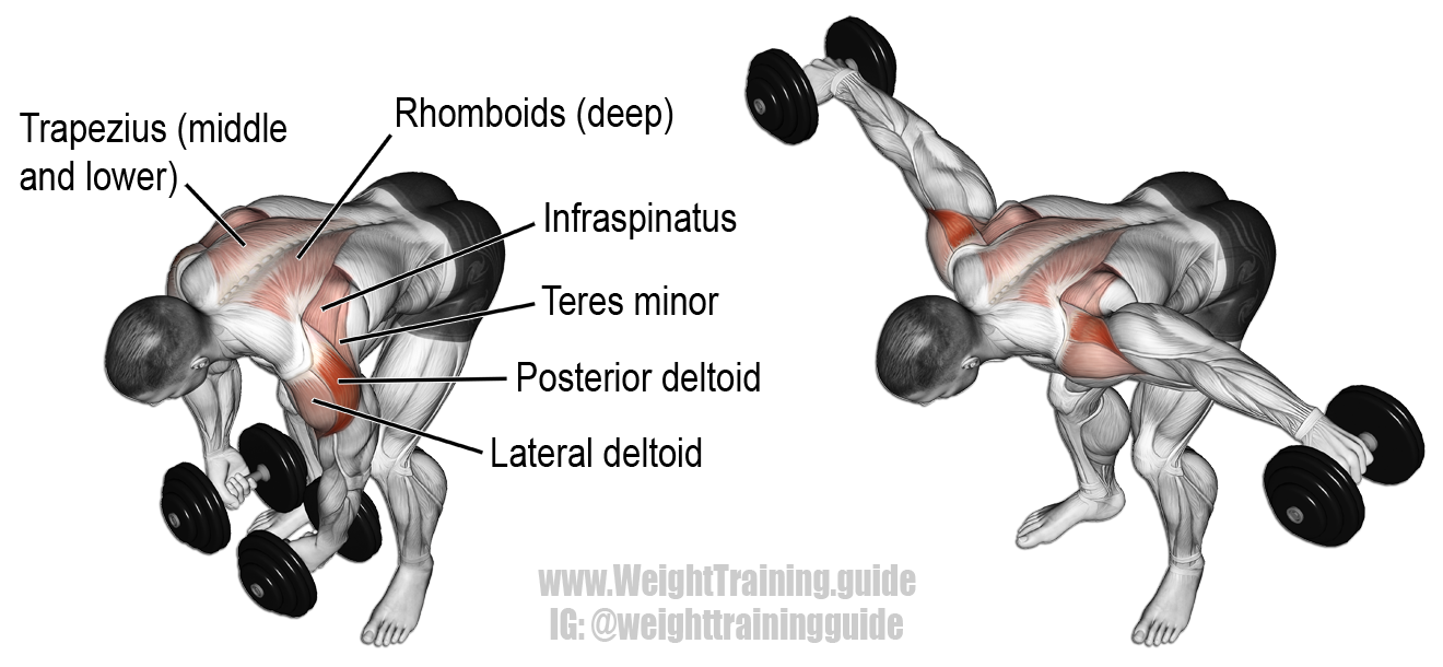 Bent over lateral raise. An isolation exercise. Target ...