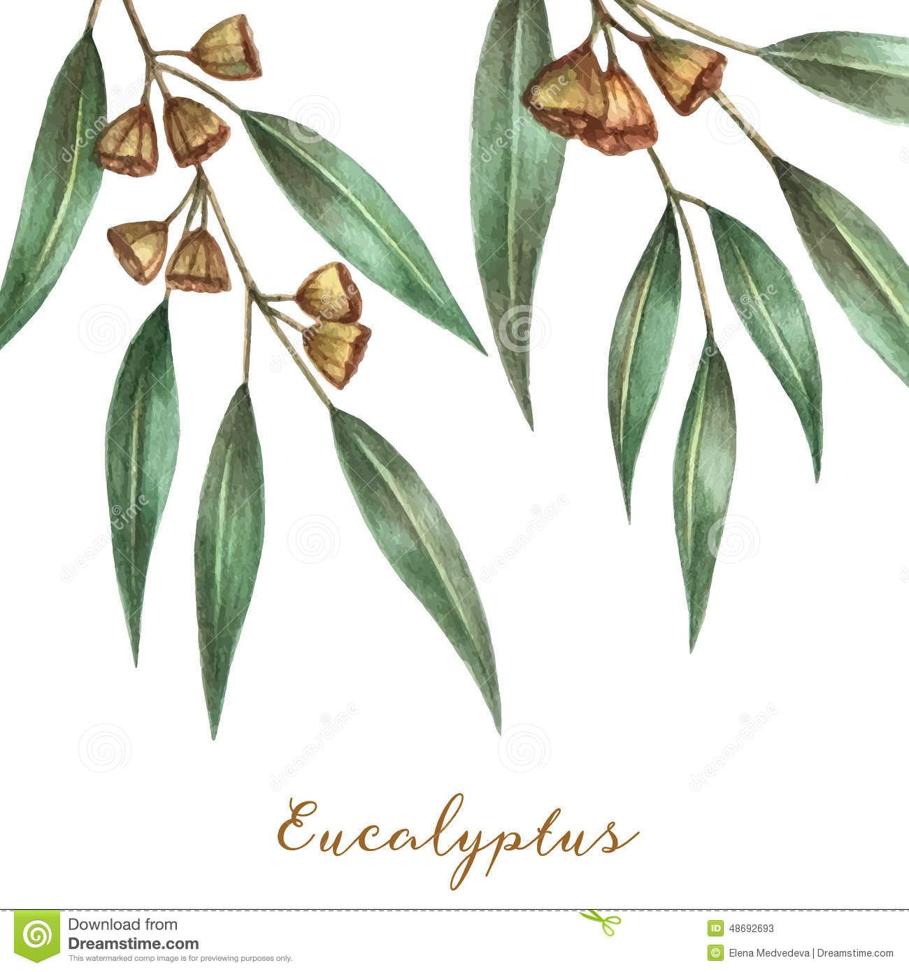 gum blossom silhouette Google Search Eucalyptus leaves