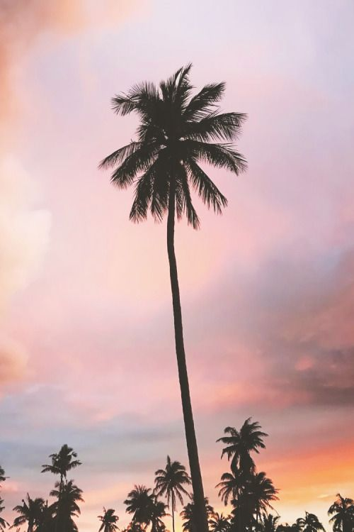 Aesthetic Iphone Coconut Tree Wallpaper
