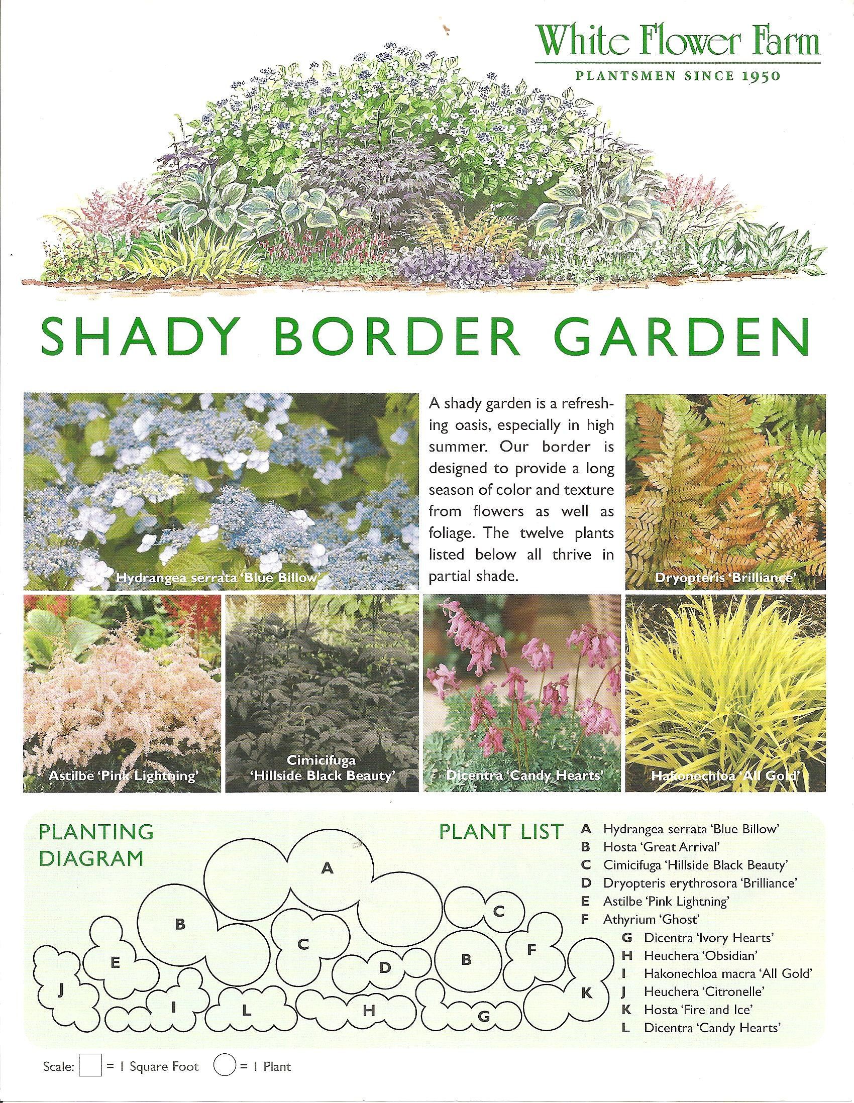 Shady border garden plan from white flower farm border for Free perennial flower garden designs