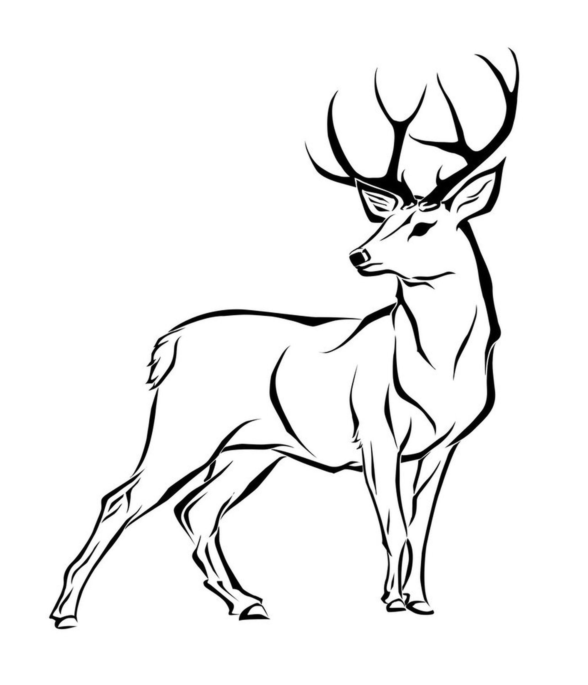 how to draw a deer kids coloring simple lines drawing in 2018