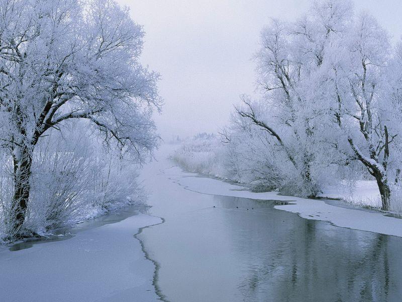 Arboles en invierno fondo de pantalla rboles blancos for Arboles en invierno