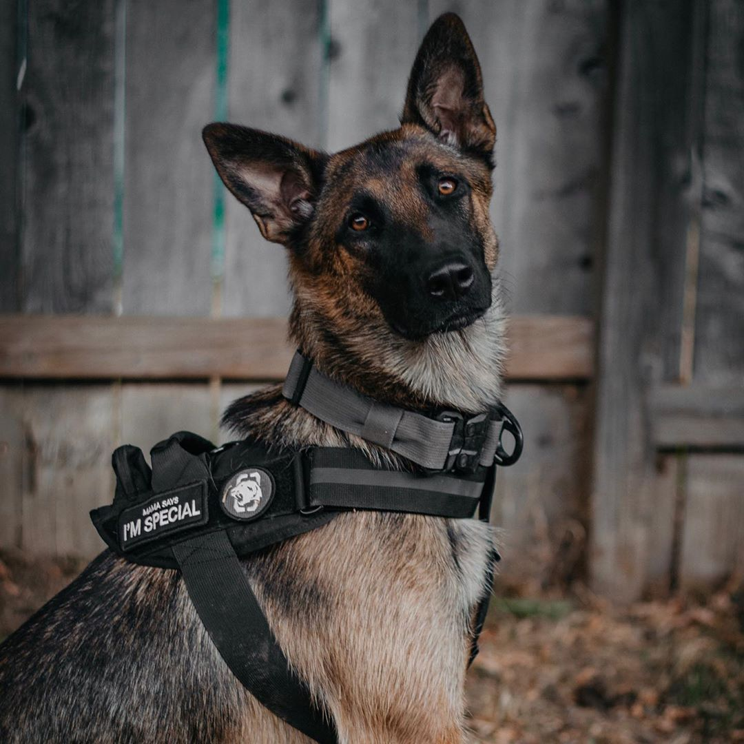 Pin On Onetigris Dog Gear
