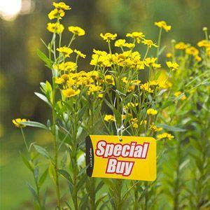 BH&G: Garden Notes:45 Money-Saving Landscape Tips