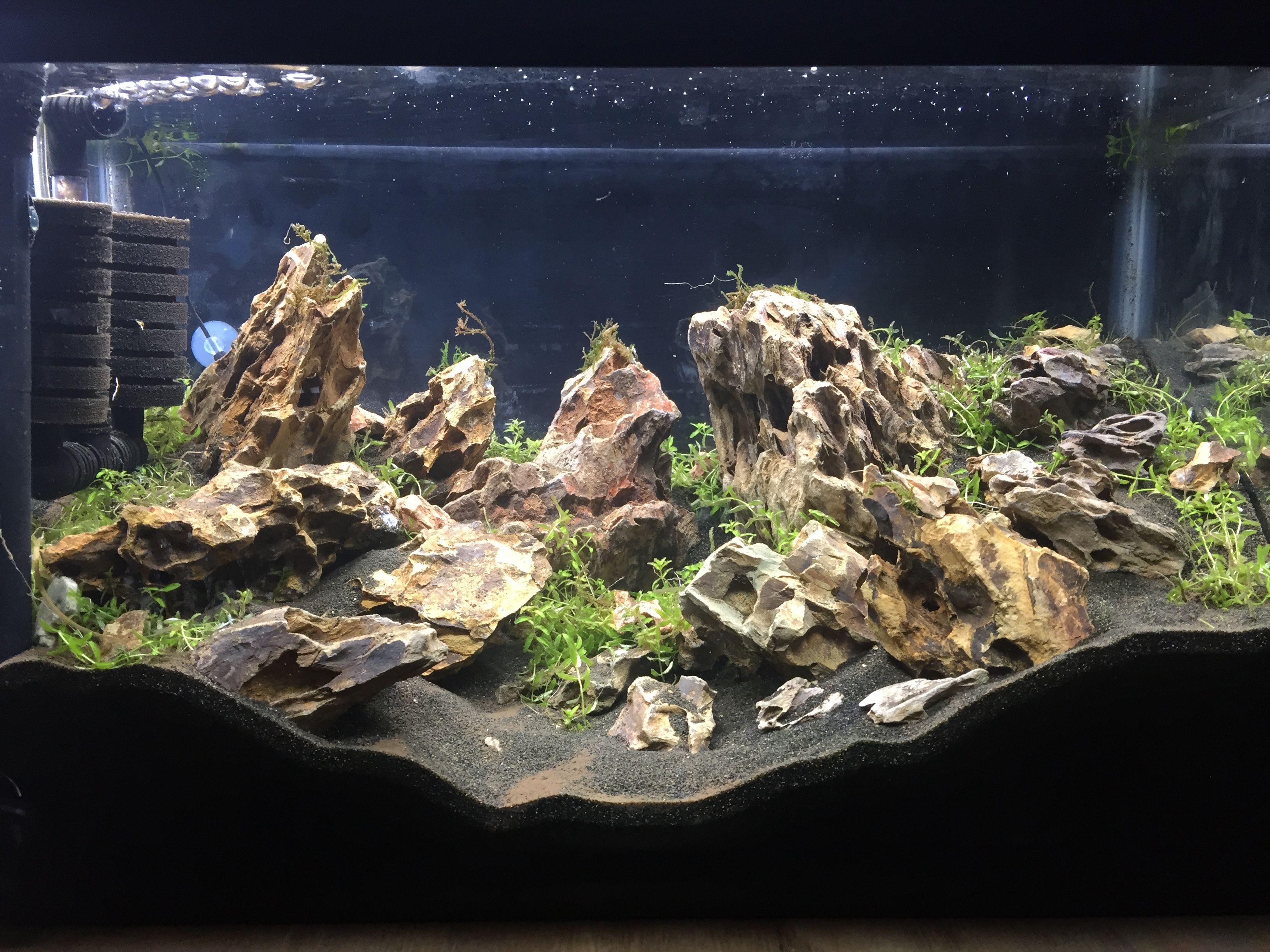 10g Dragon Stone And Moss Aquascape Fresh Water Fish Tank Aquascape Aquarium Fish Tank