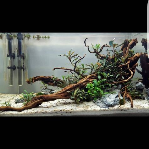 Acquario acquari acquariologia acquariofilia aquarium for Arredamento acquario