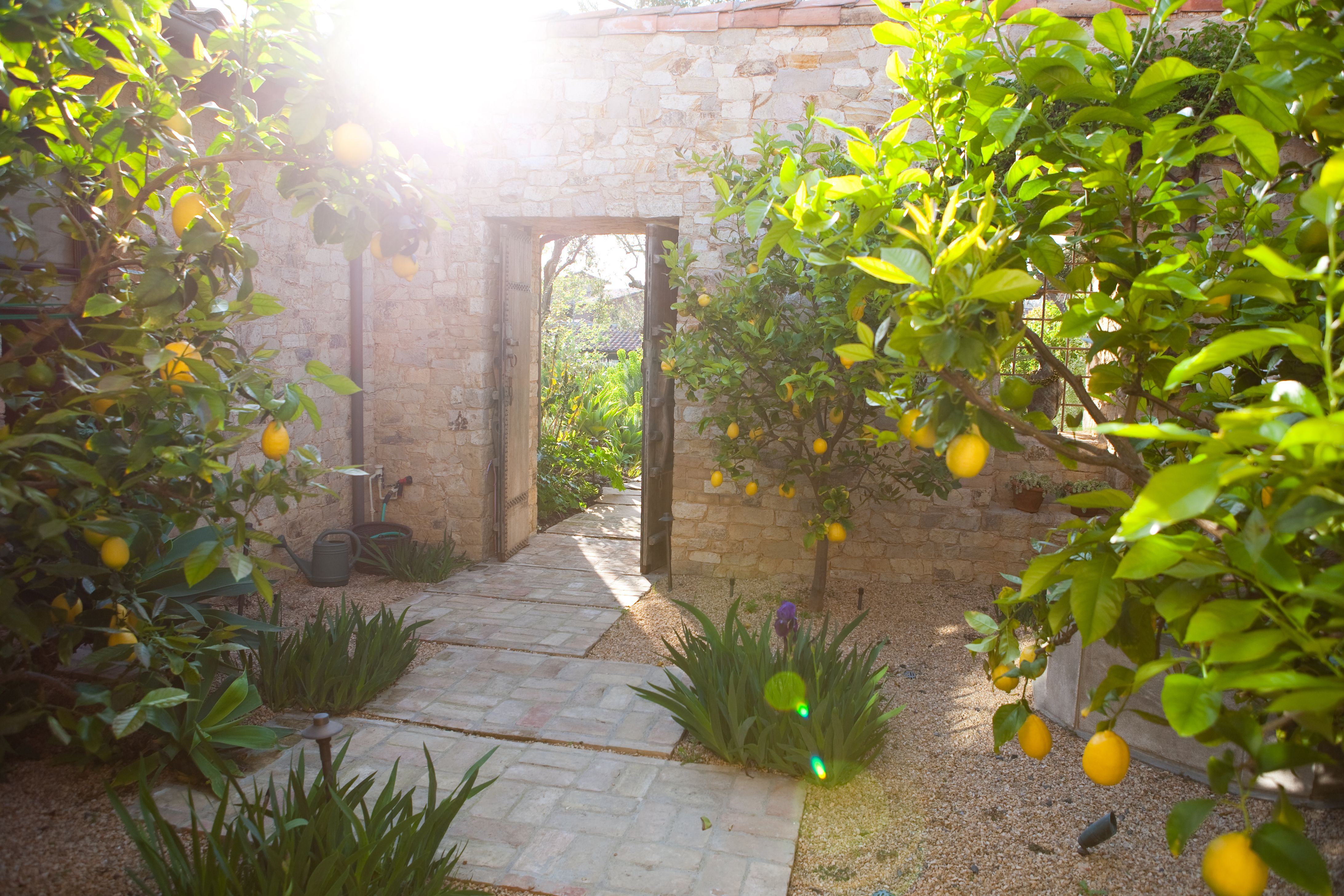 vote for molly wood garden design for best edible garden in the