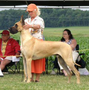 Lobato Great Danes Most Notables Big Dogs Gran Danes Mans