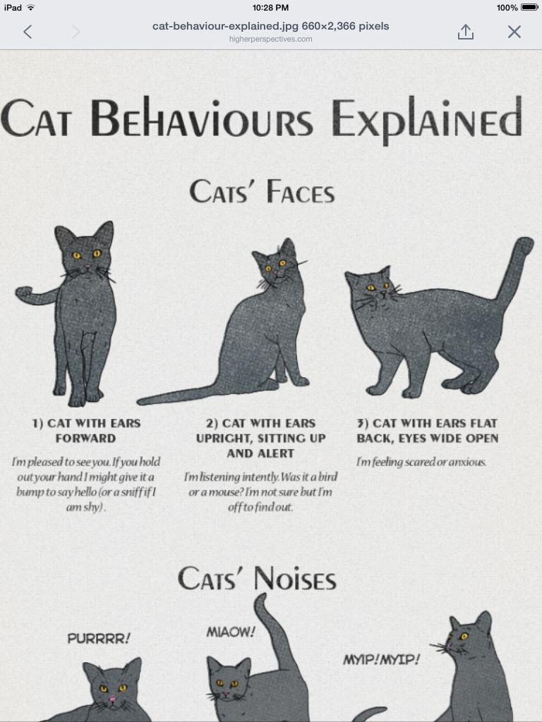 Cat's Behaviour cat's face Cat behavior, Cat language