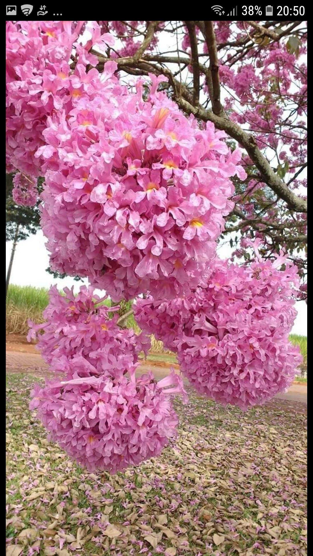 Fantastico Flores Exoticas Flores Bonitas Flores Increibles