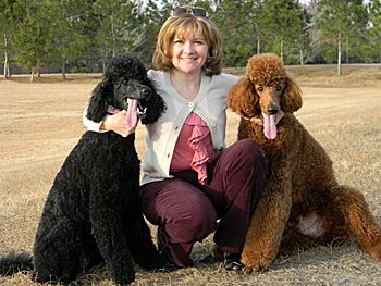 Florida Poodle Rescue Group Poodles Best Dogs Ever
