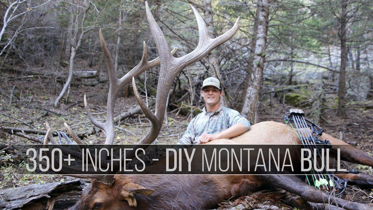 350 Inch Bull Elk Hunt Elk Hunting Bull Elk Bull