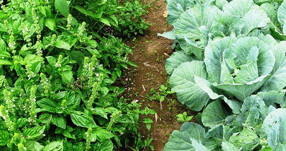 8 Major Principles Of Bio Intensive Gardening
