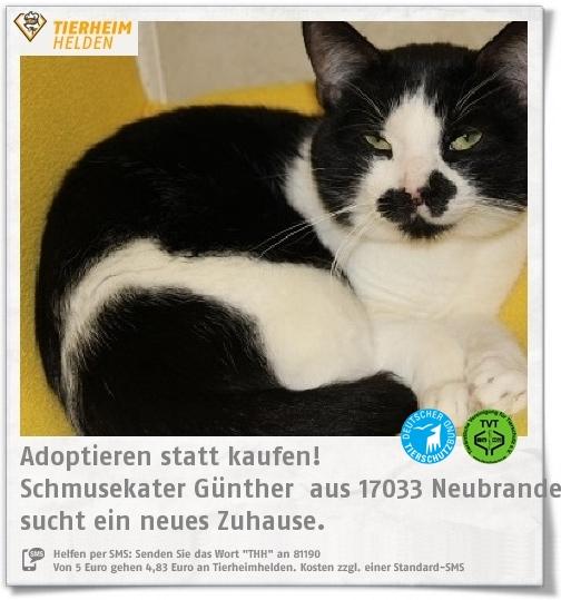 Günther ist als Fundtier zum Tierschutzverein