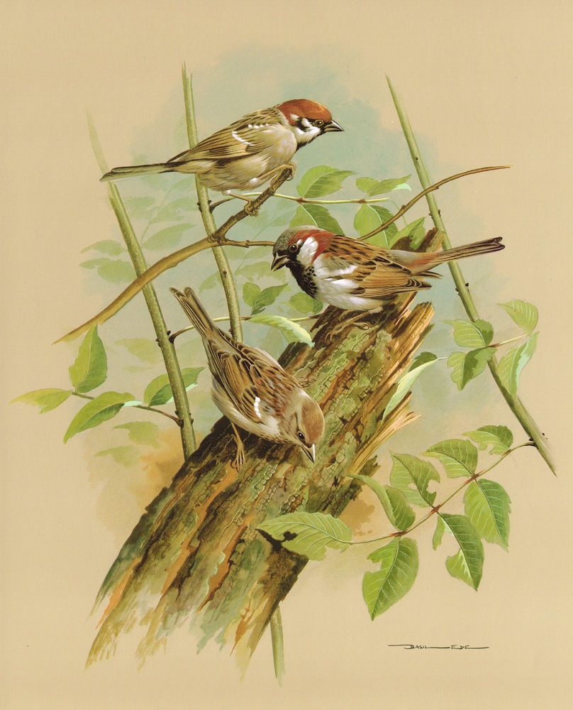 Something is. vintage bird house paintings remarkable idea
