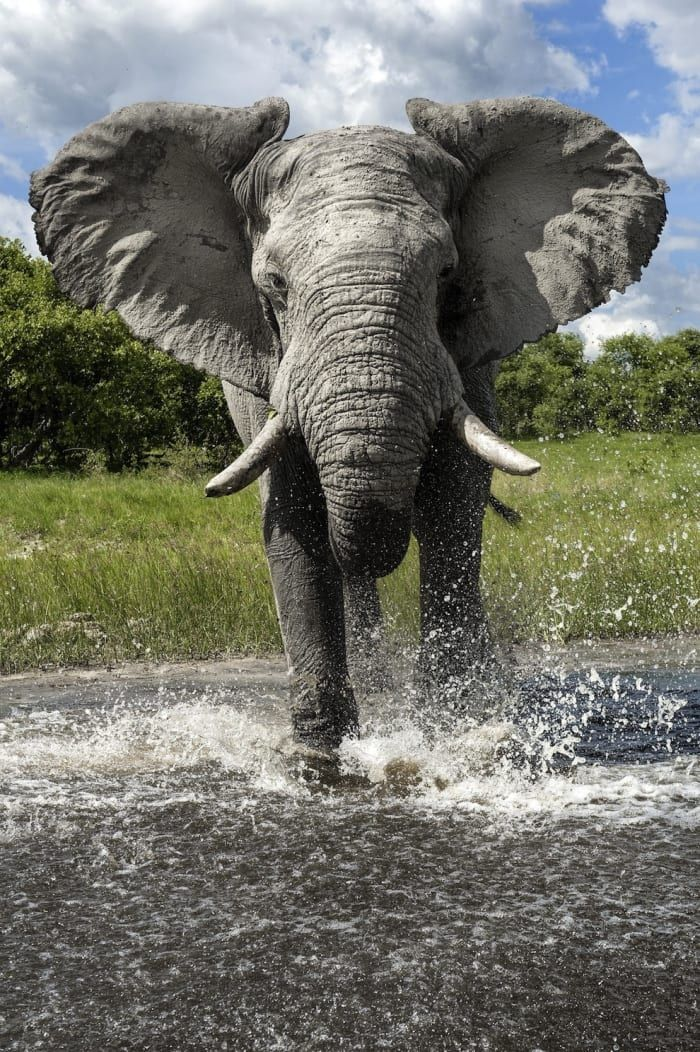 Definitive Photographic Proof That Elephants Are Majestic As Hell
