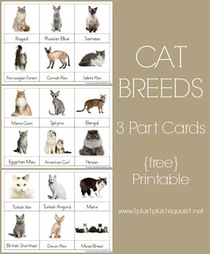 Cats Unit Study 1st Grade Montessori Printables Pets Preschool Cat Breeds