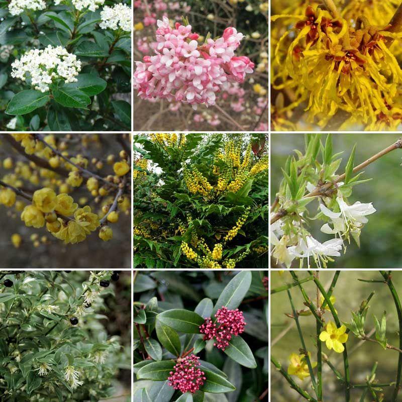 Fleurir Votre Jardin En Hiver Jardins Fleur Hiver Et Plante Hiver