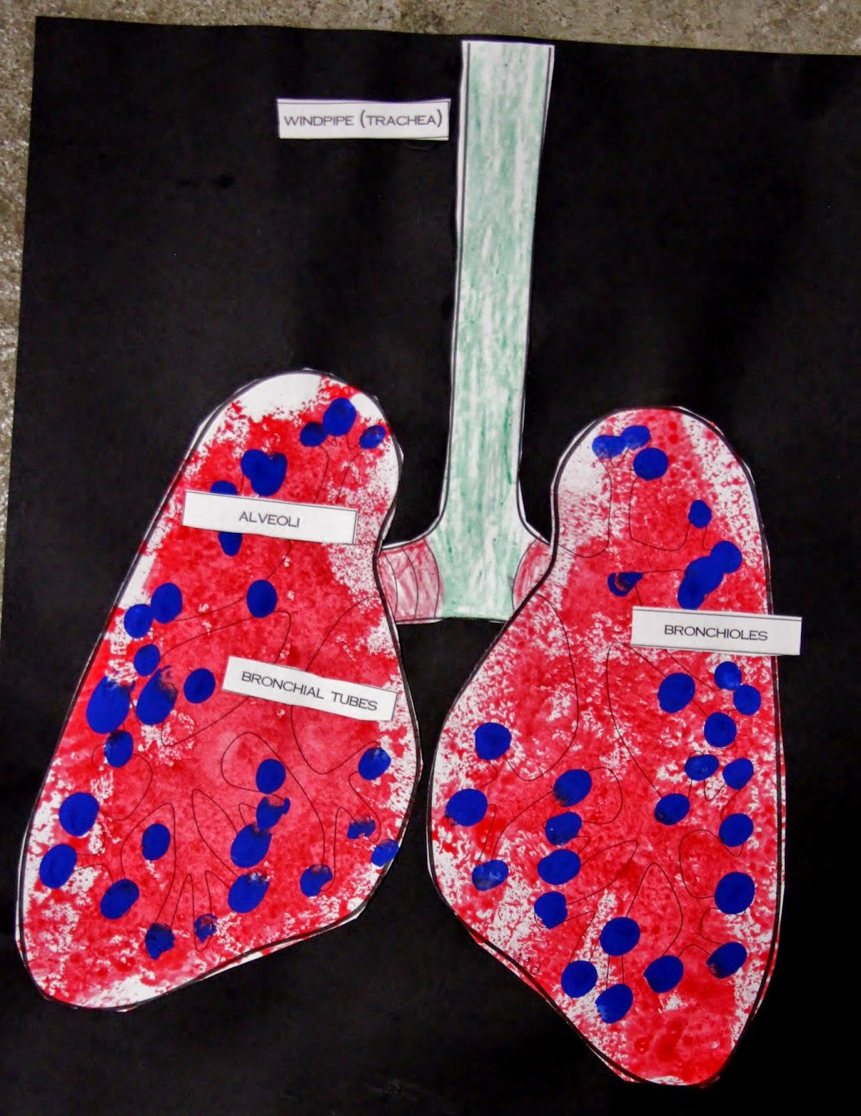 Breathe In Breathe Out Respiratory System Activities