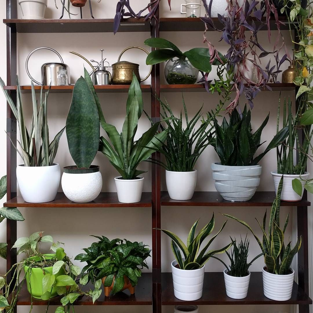 Instagram With Images Plants Indoor Plants House 400 x 300
