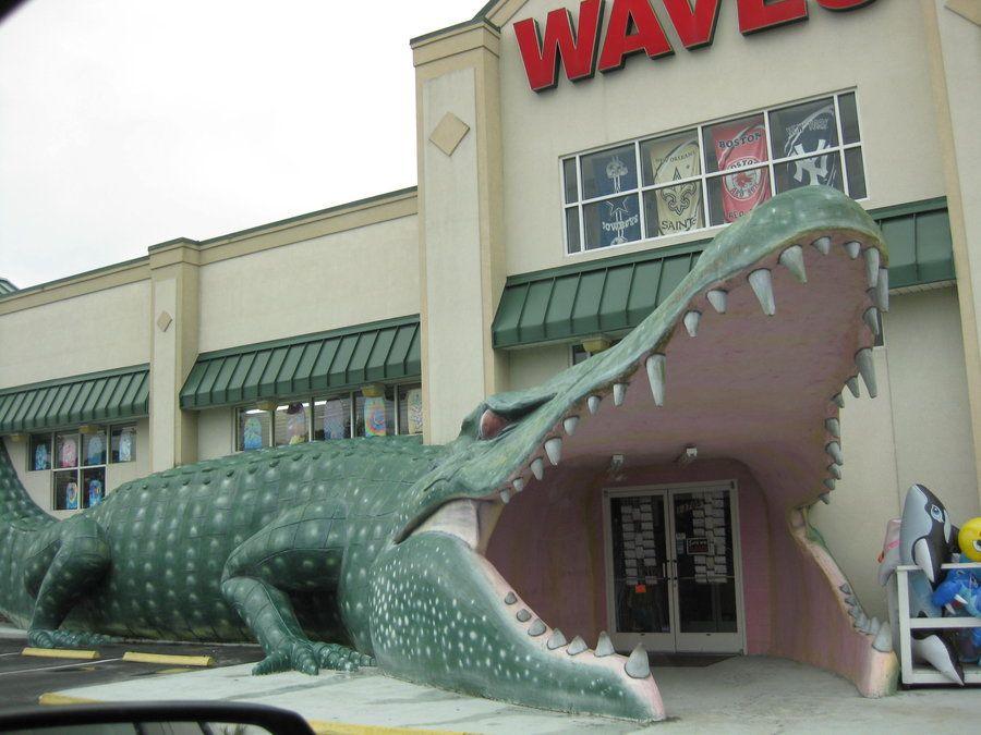 Souvenir Gator Surf City North Carolina So Many Pictures Were Taken When