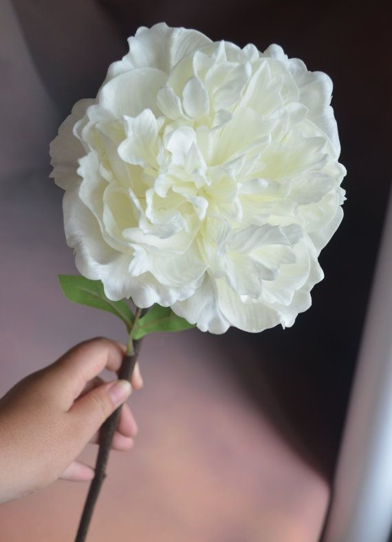 White Ivory Peony Flowers Real Touch Flowers Artificial Open Peony ...