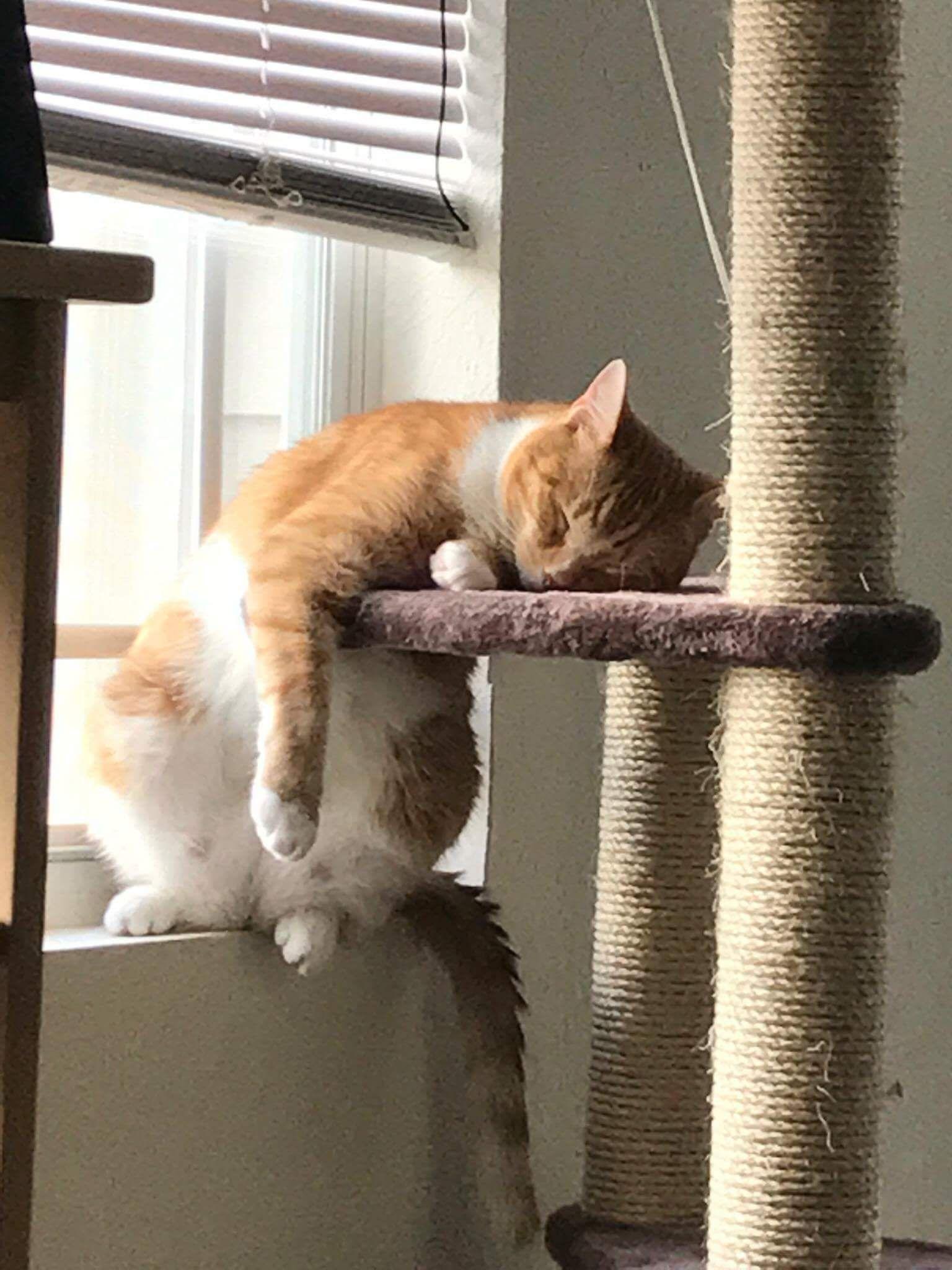 Pin em cats