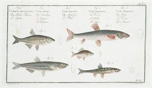i like these fish for a neutral http://digitalgallery.nypl.org/nypldigital/dgkeysearchdetail.cfm?trg=1&strucID=208048&imageID=403840&parent_id=108793&snum=&s=&notword=&d=&c=&f=&k=1&sScope=&sLevel=&sLabel=&sort=&total=456&num=0&imgs=20&pNum=&pos=10