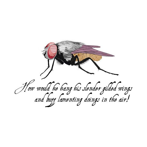 fly - insect - nursery art - wall art - 8x8 fine art print - shakespeare quote