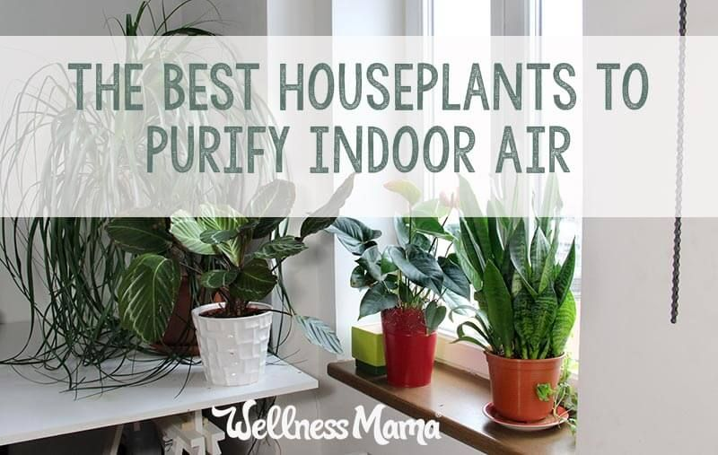 the best houseplants for purifying indoor air that are pretty too rh pinterest com
