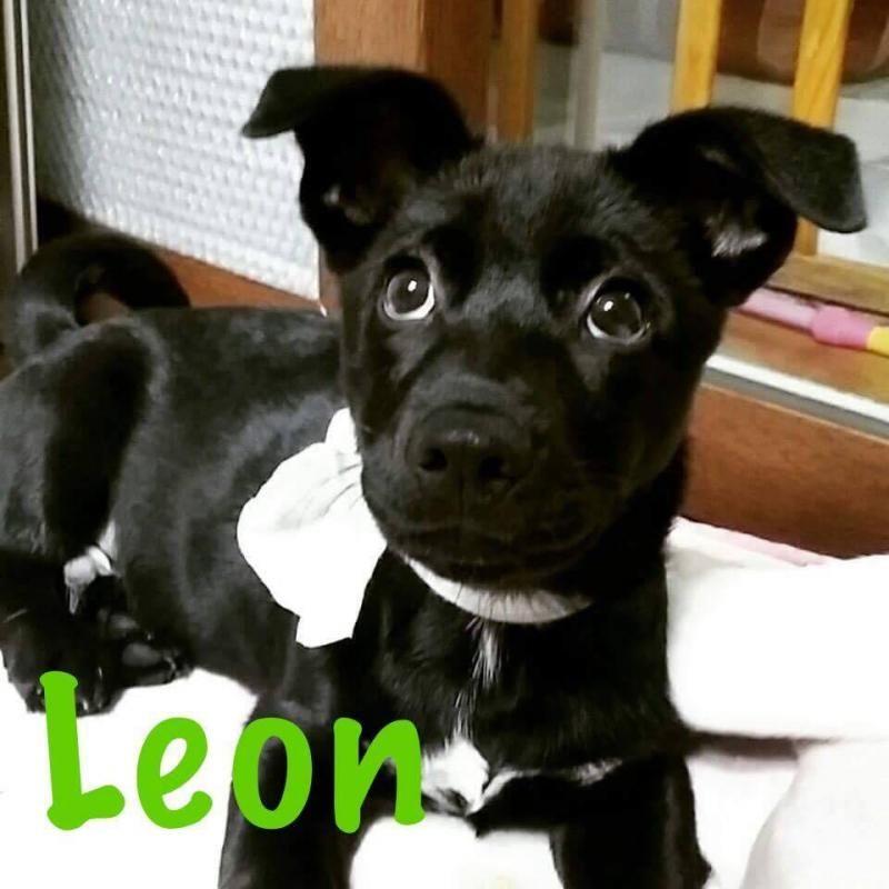 Adopt Leon on Petfinder Animals and pets, Animals, Adoption