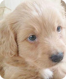 Seriose Labrador Zuchter Finden