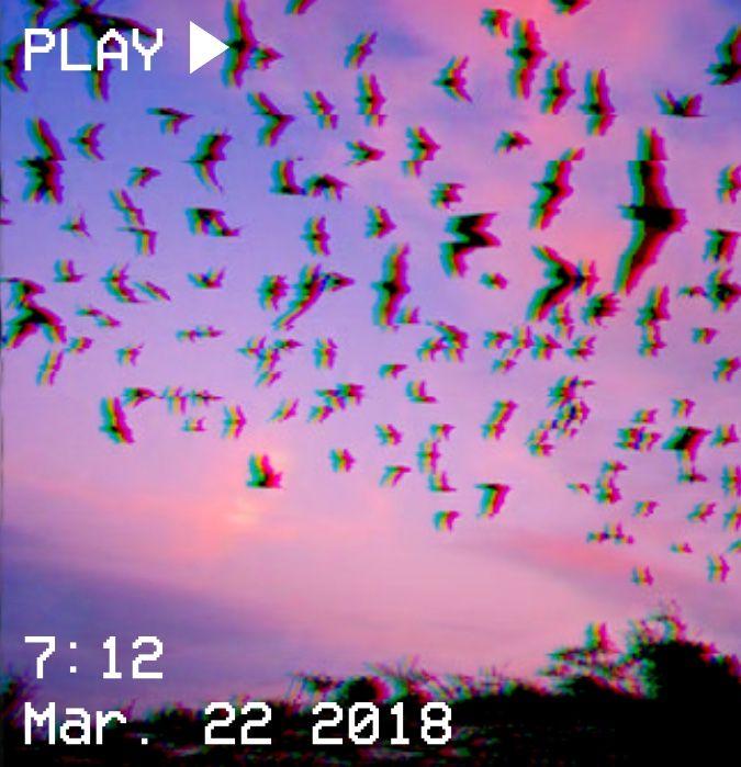 M O O N V E I N S 1 0 1 Vhs Aesthetic Sunset Pink Purple Birds