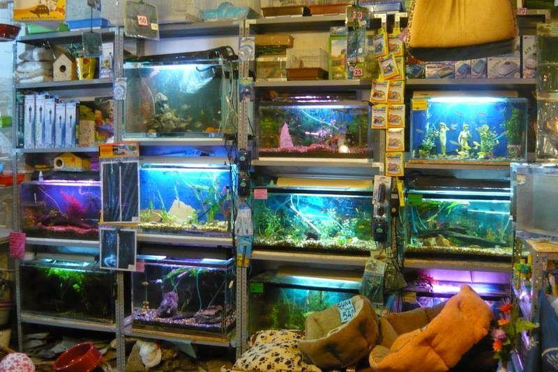 Peces tropicales de agua dulce mis peces en for Peces de agua dulce para peceras