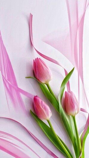 Flores Imágenes De Tulipanes Fondos De Pantalla Tulipanes Tulipanes De Color Rosa