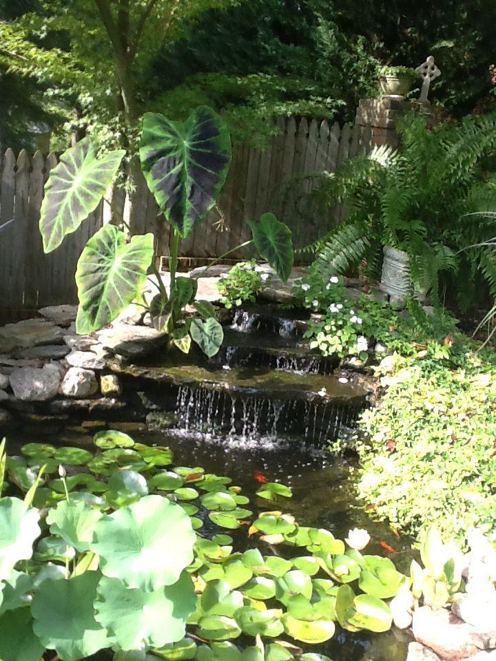 Love my water garden gardeniing pinterest pond and for Koi ponds near me